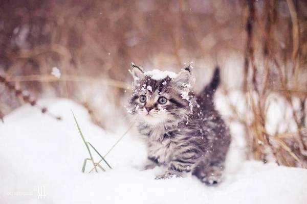Котенок на снегу