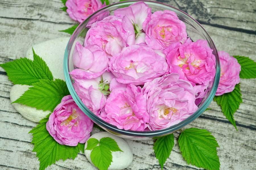 Приготовление мусса из чайной розы