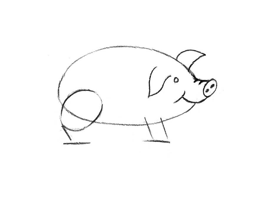 Свинка картинка карандашом