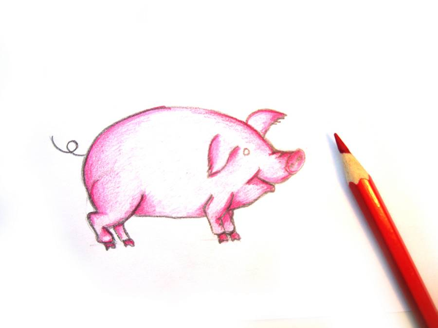 Как нарисовать свинью