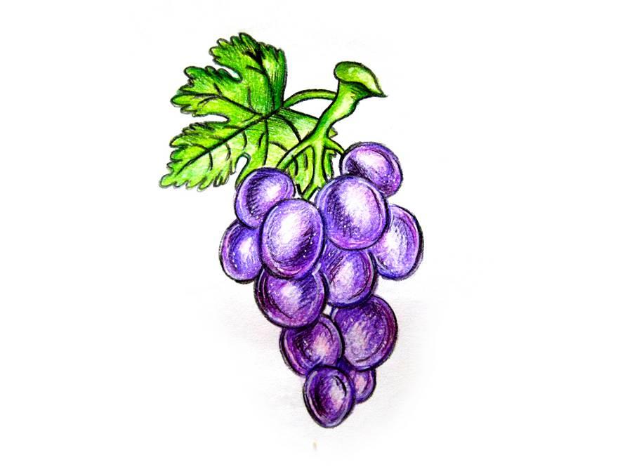 Нарисованный виноград