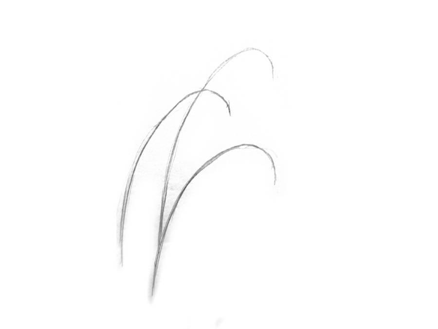 Поэтапный рисунок подснежника шаг 1