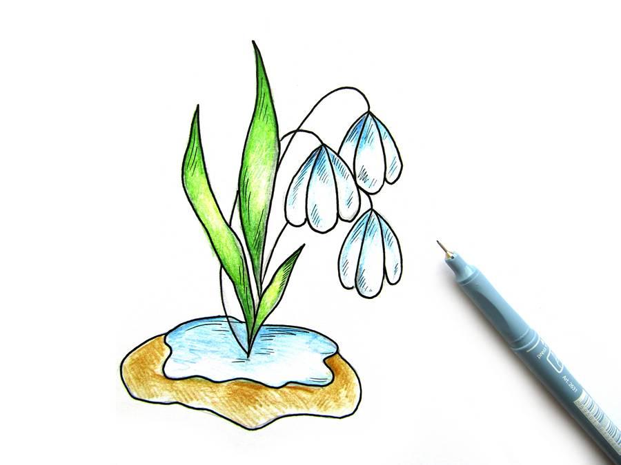 Поэтапный рисунок подснежника шаг 10