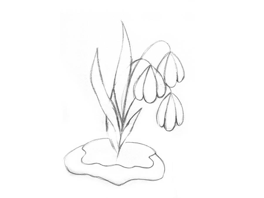 Поэтапный рисунок подснежника шаг 5