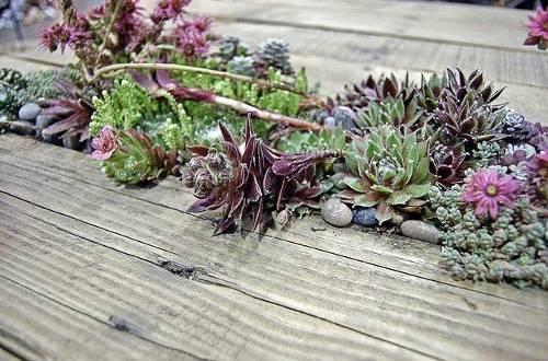 Как обновить интерьер растениями