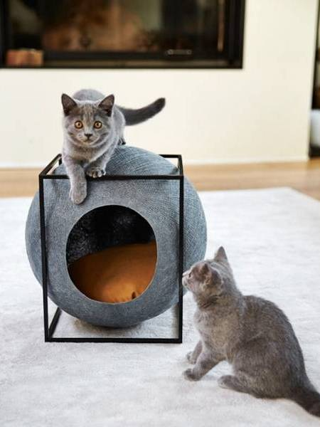 Котята у круглого домика