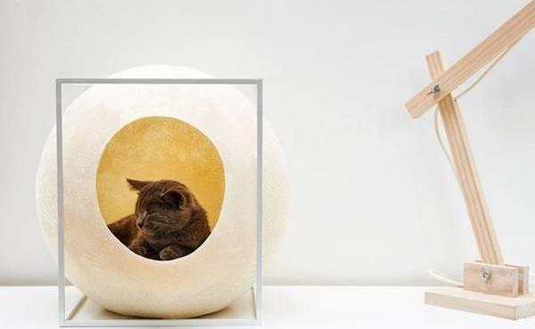 Кот в круглом домике