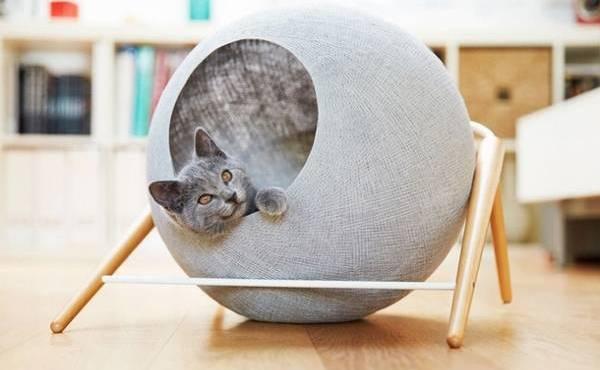 Котенок в круглом домике