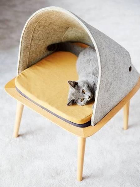 Котенок на табуретке под капюшоном